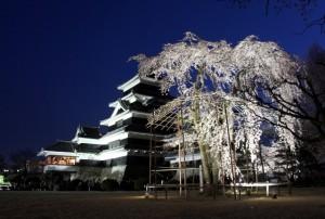夜桜会昨年の様子